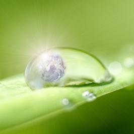 Nielen rastliny potrebujú chlorofyl