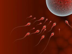 Alergia na spermie