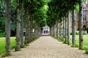 Najkrajšie stromy vo vašej okrasnej záhrade
