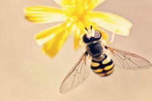 Uštipla vás včela alebo osa? Ako postupovať?